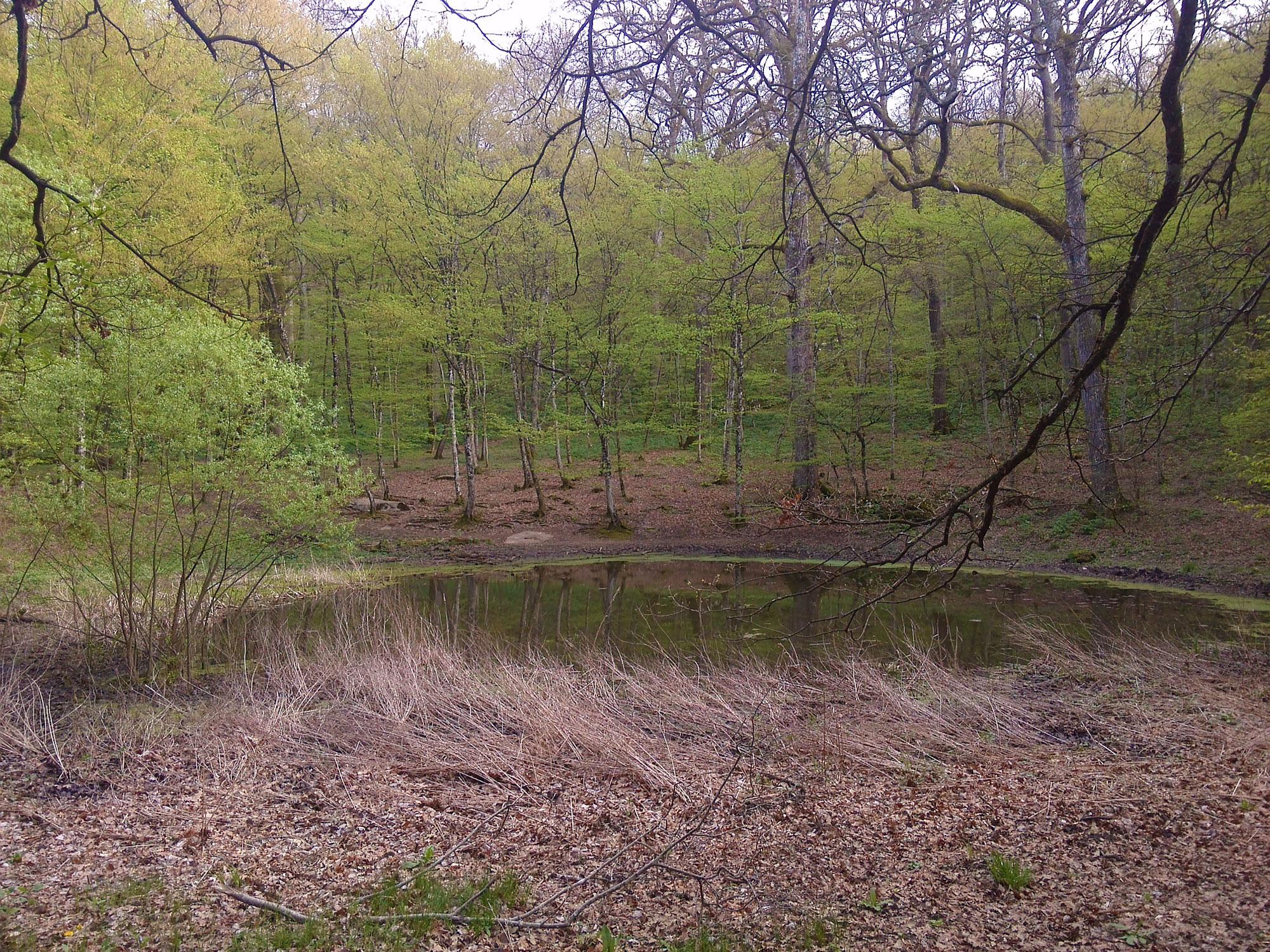 Oasi naturali a trieste visitare lo stagno di percedol for Pesci di stagno