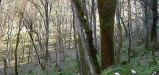 trebiciano-bosco