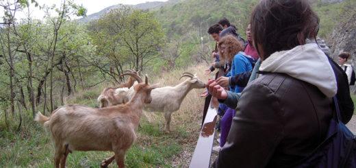 escursione didattica Cooperativa Curiosi di Natura