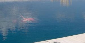 remault clio rossa sotto acqua