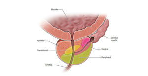 prostata legenda