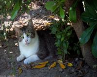 10 oasi felina foto maria luisa runti