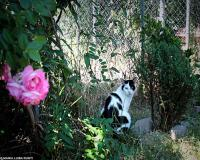 2 oasi felina foto maria luisa runti