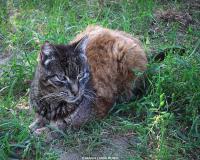 3 oasi felina foto maria luisa runti