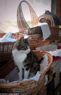 7 oasi felina foto maria luisa runti