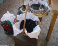 8 oasi felina foto maria luisa runti