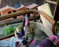 9 oasi felina foto maria luisa runti