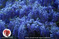 cascata floreale