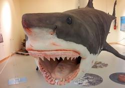 squalo museo civico trieste