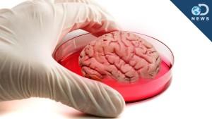 cervello-lab