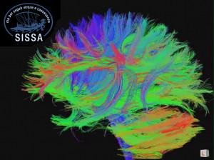 cervello-nello-spazio