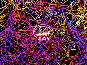 tessuti-nervosi-sissa