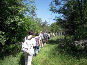 escursione Carso Timavo bosco Cernizza