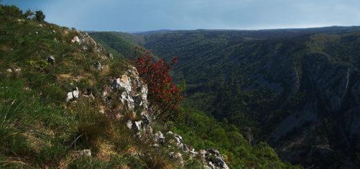 sopra la Val Rosandra