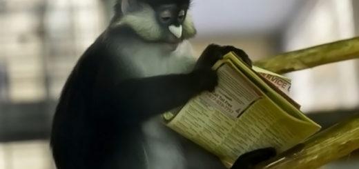 scimmia che legge esperimenti linguaggio