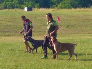 gara di tiro cani