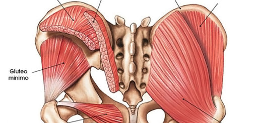 muscolo otturatore gluteo