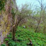 Sgonico dolina Riselce