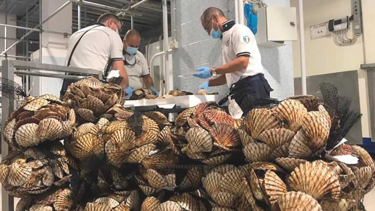 frutti di mare sequestrati a Trieste