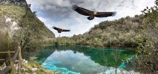 lago di Cornino grifoni