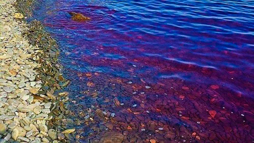 Mare viola a Capo Ronek Strugnano Isola Slovenia Istria