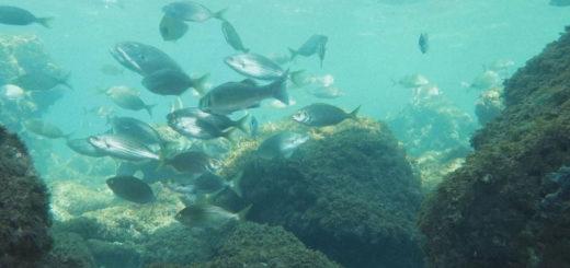 seawatching area marina protetta di Miramare Trieste