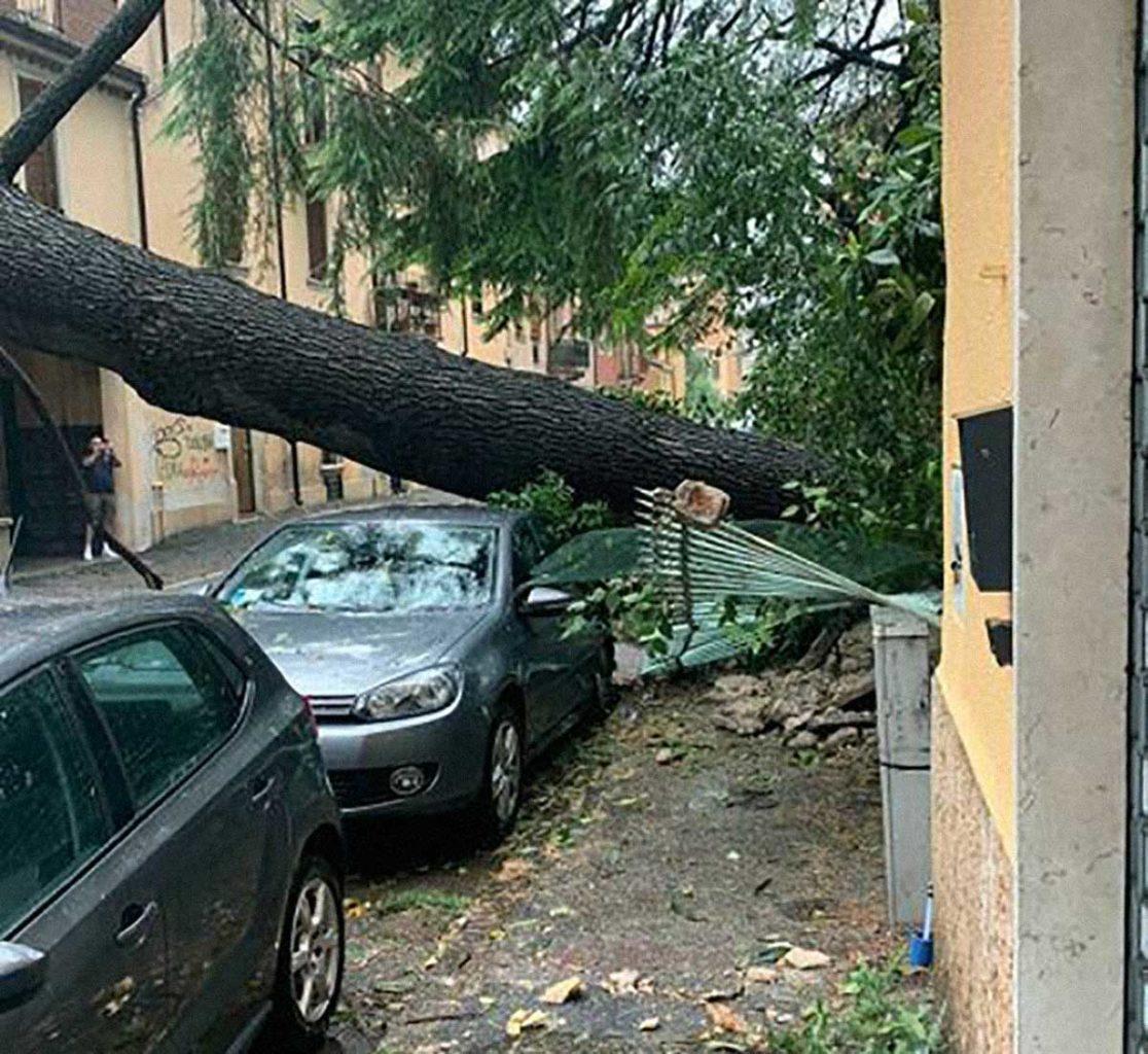 temporale Verona albero abbattuto