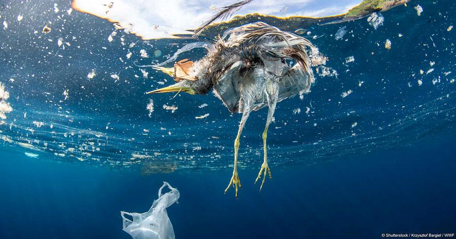 uccello morto mare inquinato acque putride