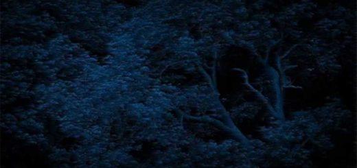 alberi al vento di bora