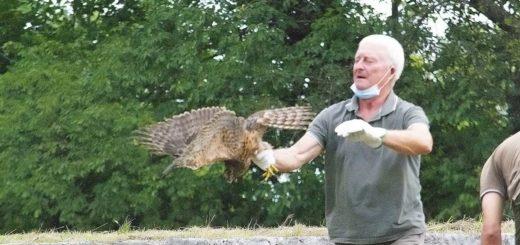 liberazione uccello Cornino