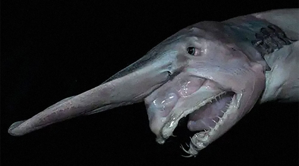 pesce strano in pericolo di estinzione