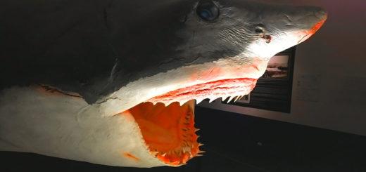 squalo civico museo di storia naturale Trieste