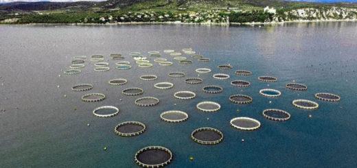 Trieste allevamento ittico