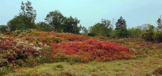Redipuglia autunno sommaco