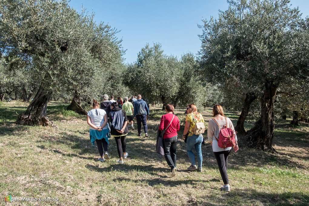 passeggiata tra gli olivii
