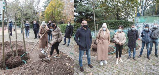 Comune di Trieste impianta albero giardino Pincherle via del Veltro
