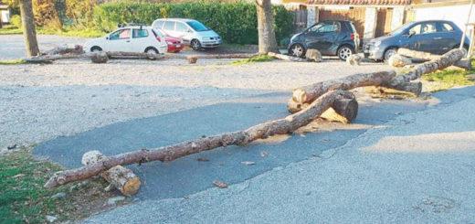 tronchi albero blocca parcheggio Basovizza