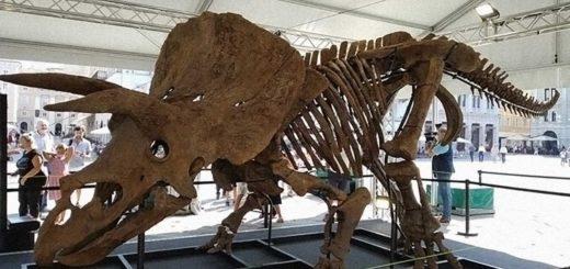 triceratopo Big John Trieste